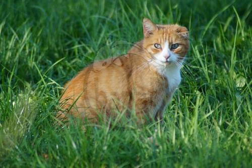 velká kočička sání